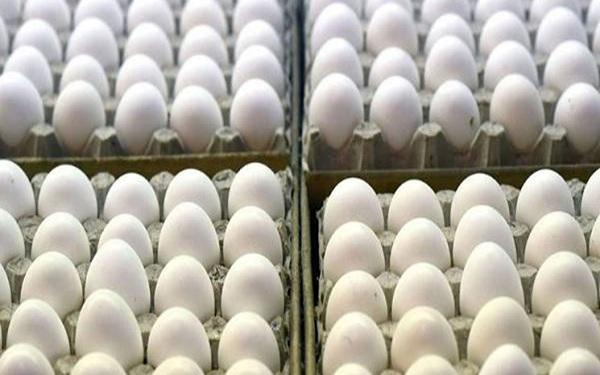 حداکثر قیمت هر شانه تخم مرغ اعلام شد